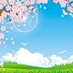 お花見のシート、冷えや湿気、ゴツゴツ感が緩和されるレジャーシートが人気です♪